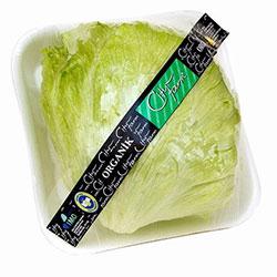 Cityfarm Organic Iceberg (KG)