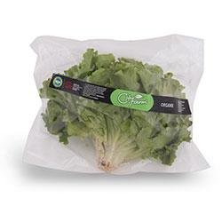 Cityfarm Organic Lettuce (Pcs)