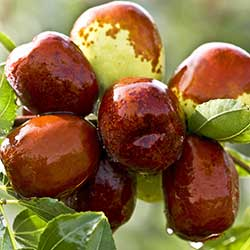 Değirmen Çiftliği Organic Jujube (KG)