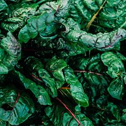 Ersöz Organic Kale (DEMET)