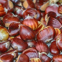 Cityfarm Organic Chestnut (KG)