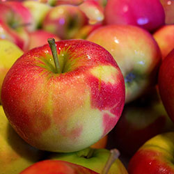 MNV Organic Apple (Red Chief) (KG)