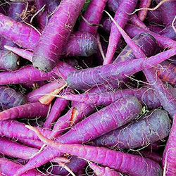 MNV Organic Purple Carrot (KG)