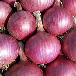 Karlıdağ Organic Onion (Purple) (KG)