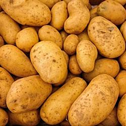 Kale Organic Potato (KG)