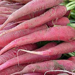Kale Organic Pink Carrot (KG)