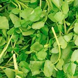 Cityfarm Organic Watercress (Pcs)