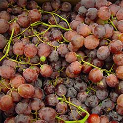 Yerlim Organic Red Grape (KG)
