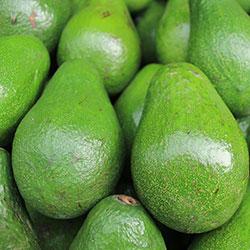 DEĞİRMEN ÇİFTLİĞİ Organic Avocado (Pcs)