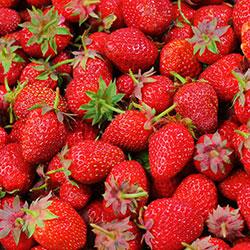 Cityfarm Organic Strawberry (KG)