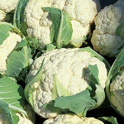DEĞİRMEN ÇİFTLİĞİ Organic Cauliflower (KG)