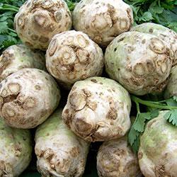 Kale Organic Cellery (KG)