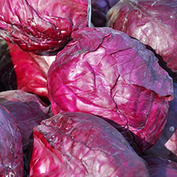 Kale Organic Purple Cabbage (KG)