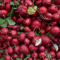 DEĞİRMEN ÇİFTLİĞİ Organic Radish (KG)