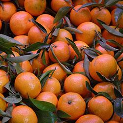 DEĞİRMEN ÇİFTLİĞİ Organic Mandarin (KG)