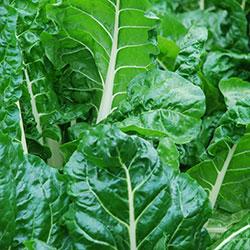 DEĞİRMEN ÇİFTLİĞİ Organic Silverbeet (Pcs)