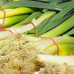 DEĞİRMEN ÇİFTLİĞİ Organic Leek (KG)