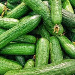 DEĞİRMEN ÇİFTLİĞİ Organic Cucumber (KG)