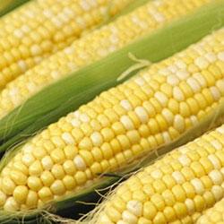 KALE Organic Corn (Pcs)