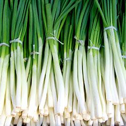 Kale Organic Green Onion (Pcs)