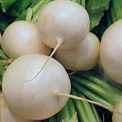 City Farm Organik Turp Beyaz (KG)