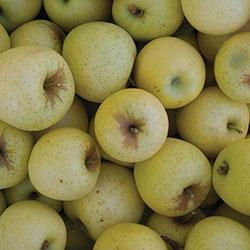 City Farm Organik Elma Sarı Golden (KG)