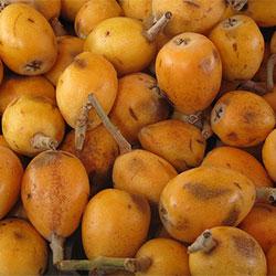 City Farm Organik Yenidünya (Malta Eriği) (KG)