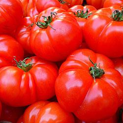 City Farm Organik Domates (Yıldız) (KG)