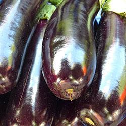 City Farm Organik Patlıcan Kemer (KG)