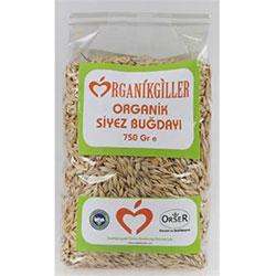 Organikgiller Organik Siyez Buğdayı (Buğday Çimi Tohumu) 500gr