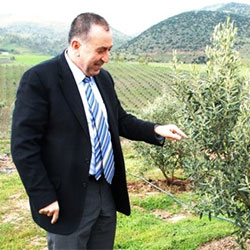 İlhan Sarı Organik Zeytin Çiftliği